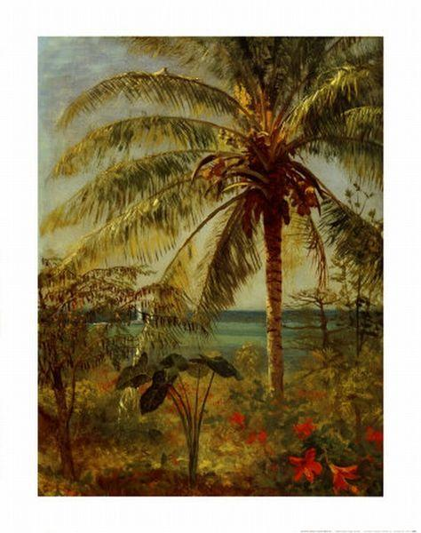 Albert Bierstadt Palm Tree, Nassau by Albert Bierstadt